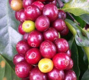 coffee-1009800 (1)